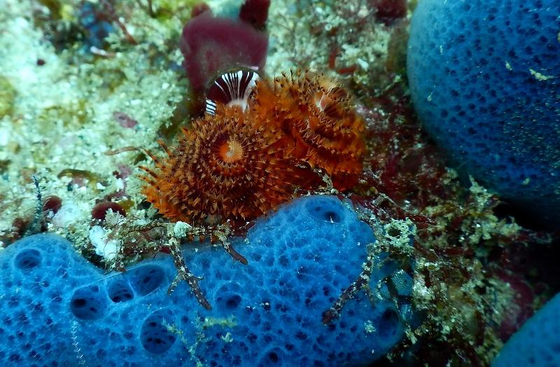 La Biodiversidad marina del Parque Nacional Huatulco