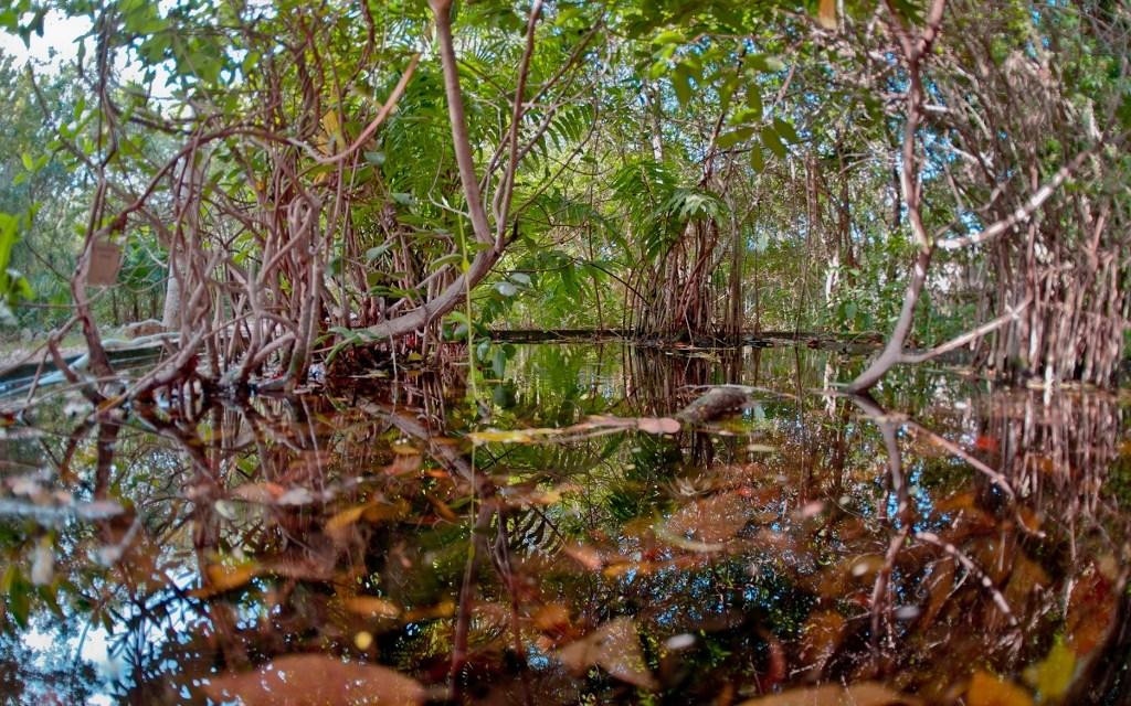 El Jardín Botánico del CICY cumple 35 años de conservación y cuidado de la naturaleza