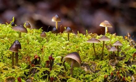 Musgos y hongos: un binomio fascinante