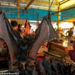 COVID 19: Impacto de los Mercados Húmedos