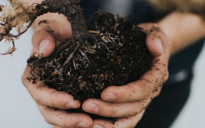 Episode 10 – What on earth is earth? A soil scientist tell us…and why we shouldn't treat it like dirt.