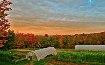 Episode 40 – Farming While Black