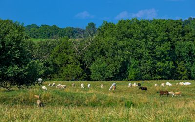 Episode 93 – Into the Pasture: Grassfed Goes Mainstream