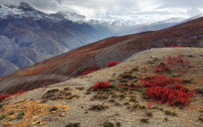 Episode 102 – From despair to care: a high mountain view of our ailing earth