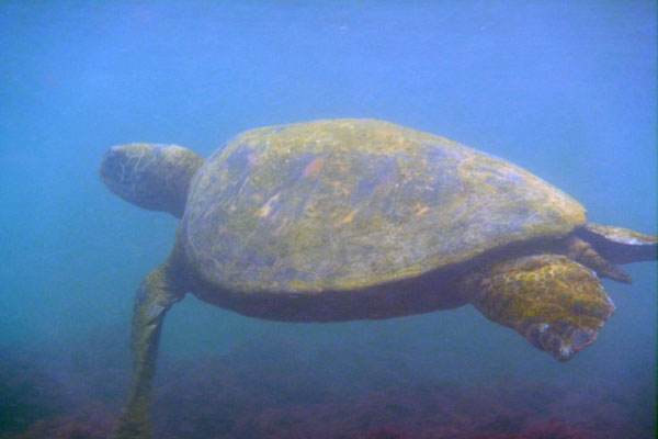 Galapagos Islands belong to which country?