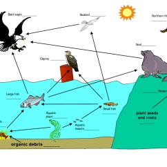 Freshwater Biomes Food Chain Diagram Nissan Navara D40 Wiring Diagrams 5th Grade Staars Life Pt 2 Quizizz