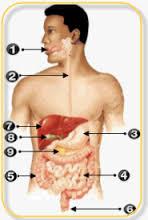 Kenali Penyebab dan Gejala TBC Tulang Belakang - Alodokter