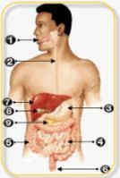 Kelainan Akibat Tulang Belakang Membengkok Ke Depan Disebut : kelainan, akibat, tulang, belakang, membengkok, depan, disebut, Kelainan, Tulang, Belakang, Membengkok, Depan, Disebut, Goreng