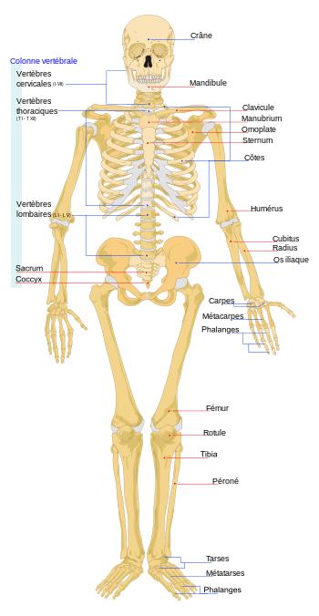 Fungsi Rangka Tubuh Sebagai Berikut Kecuali : fungsi, rangka, tubuh, sebagai, berikut, kecuali, KELAS, SISTEM, GERAK, MANUSIA, Quizizz