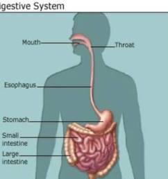 Science 5th grade. Digestive system   Science Quiz - Quizizz [ 1028 x 1033 Pixel ]