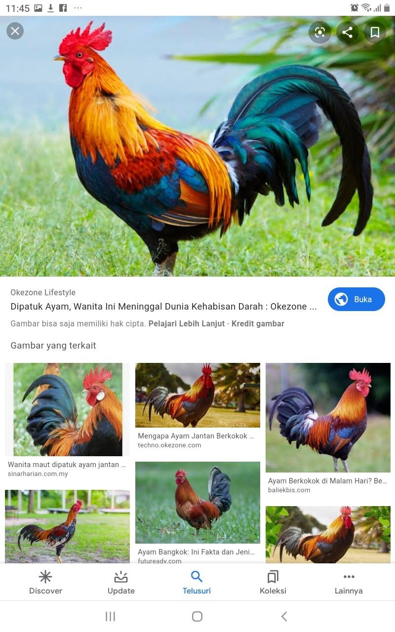 Ayam Berkokok Di Malam Hari : berkokok, malam, Object, English, Quizizz