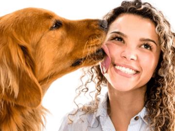 cachorro marrom lambendo o rosto de uma mulher de cabelos cacheados