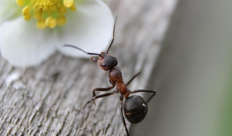 → Formigas Em Casa – Qual o Significado Espiritual?