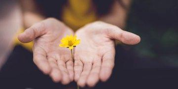pedir perdão - imagem oferecendo uma flor