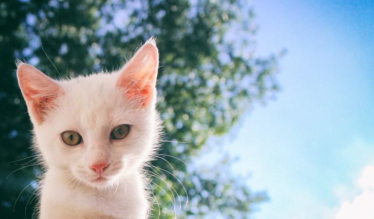 → 780 Nomes Para Gatos Brancos (Fêmeas e Machos)
