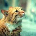 gato rajado olhando para cima enquanto passeia