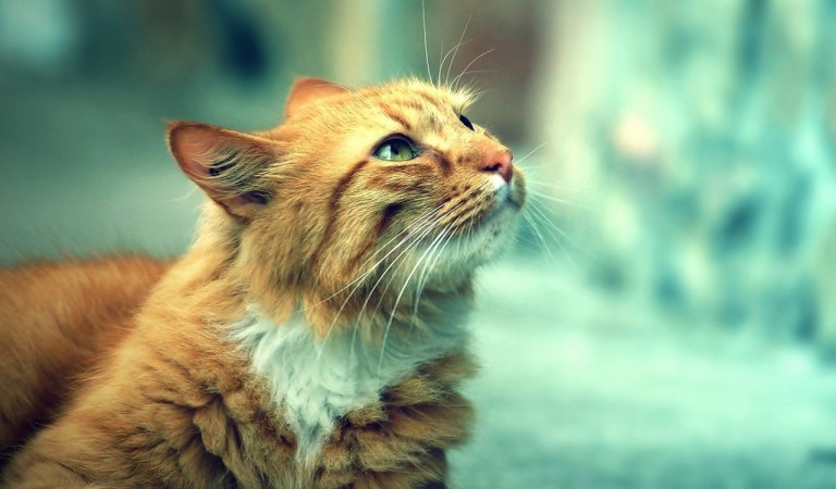 → 472 Nomes Para Gatos Rajados (Fêmeas e Machos)