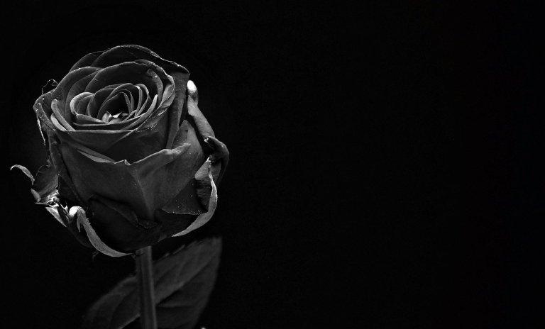imagem de uma flor representando o luto
