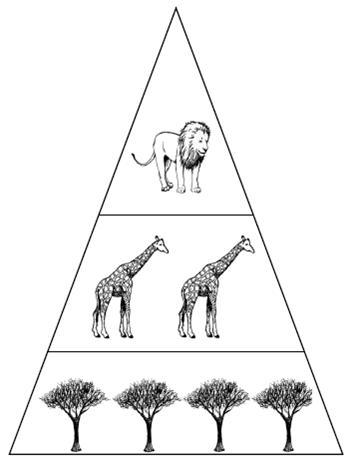 S2 Science Revision » Biodiversity 2