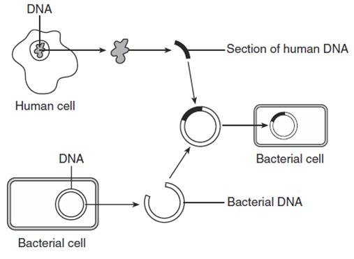 MCQ 1_6A Genetic Engineering