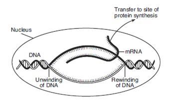 National 5 Unit 1 Homework » MCQ 1_7A Photosynthesis Chemistry