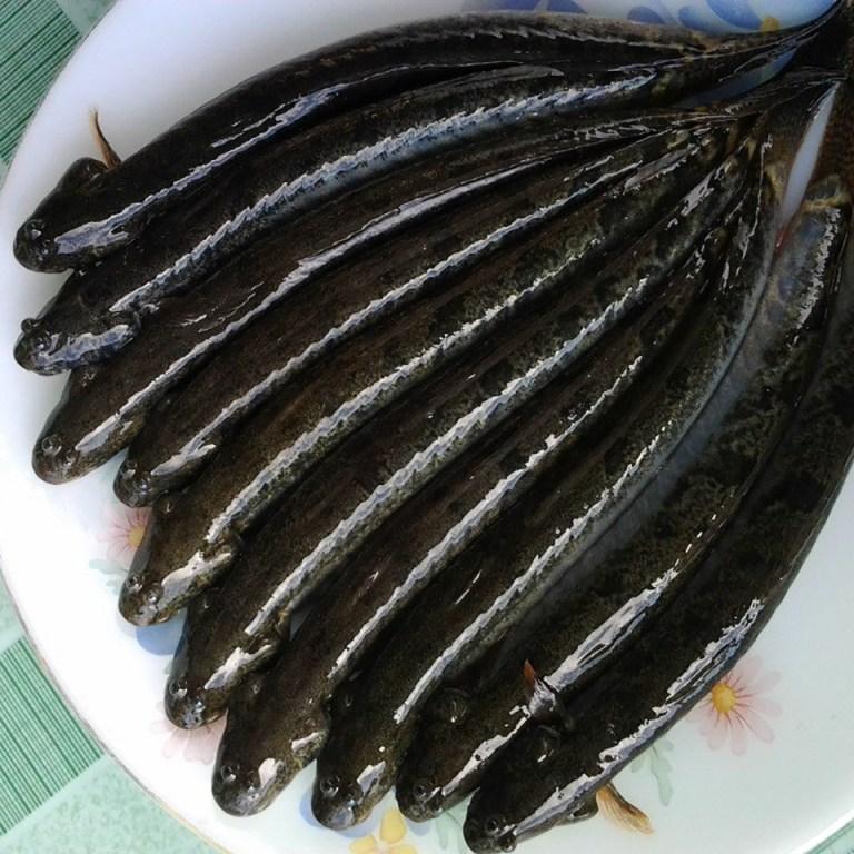 Cá kèo tươi xếp trên dĩa