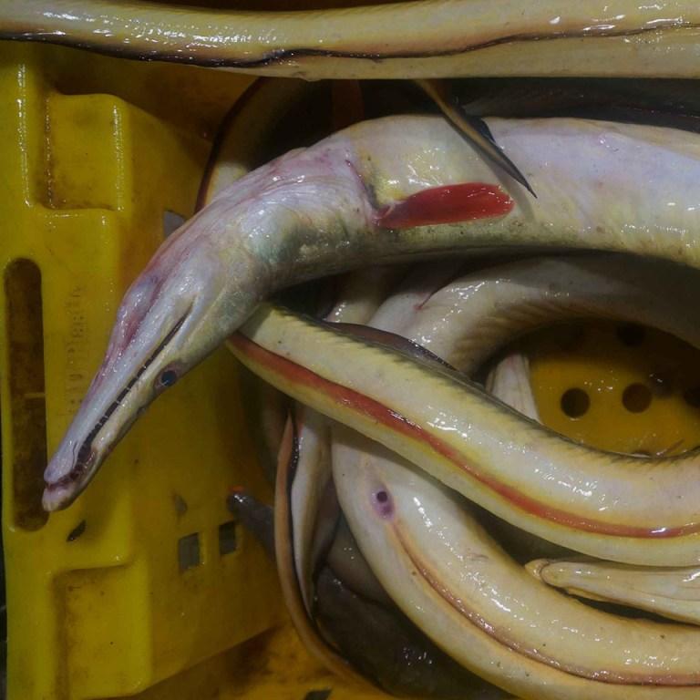 Cá lạt tươi xếp trong thùng