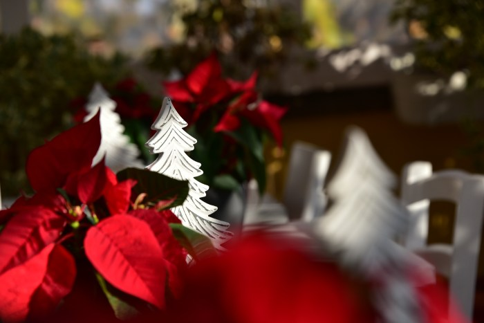 Christmas in Rome - QuodLibet bed and breakfast
