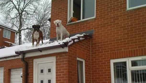 Funny Roof Photos by QuotationCheck