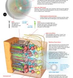 diagram of the human eye retina  [ 1160 x 1550 Pixel ]