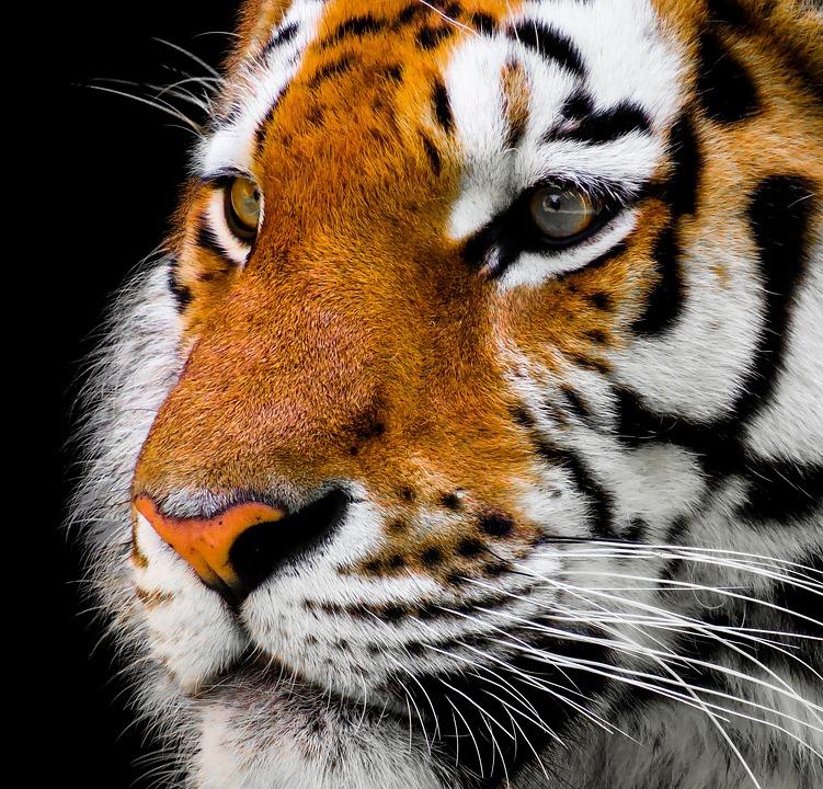 animal-2923186_960_720.jpg