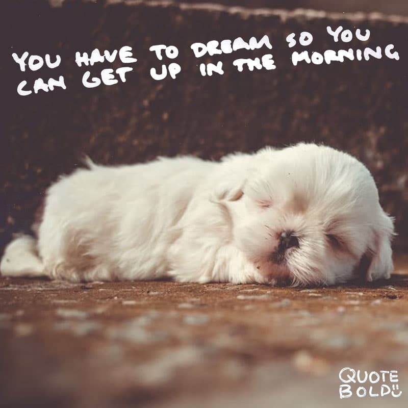 "quote ""You have to have a dream so you can get up in the morning."" - Billy Wilder"