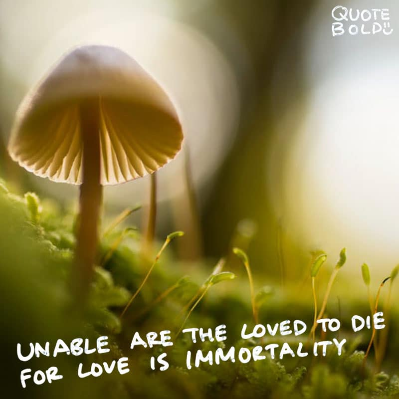 "quote ""Unable are the loved to die, for love is immortality."" - Emily Dickinson"