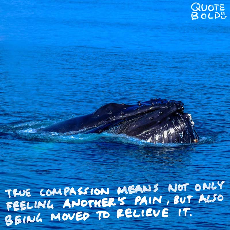 "quote ""True compassion means not only feeling another's pain but also being moved to help relieve it."" - Daniel Goleman"