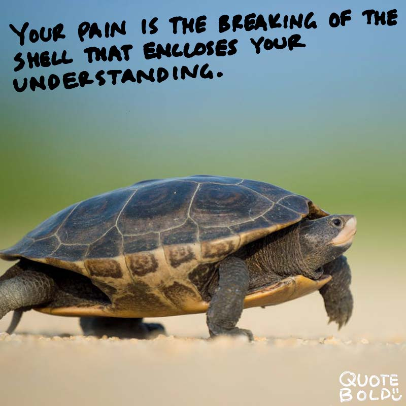 "quote ""Your pain is the breaking of the shell that encloses your understanding."" - Khalil Gibran"