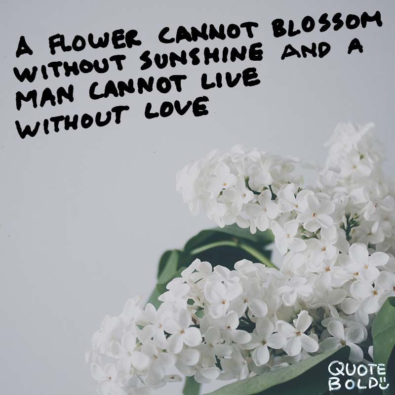 "wednesday romantic quotes ""A flower cannot blossom without sunshine, and man cannot live without love."" - Max Muller"