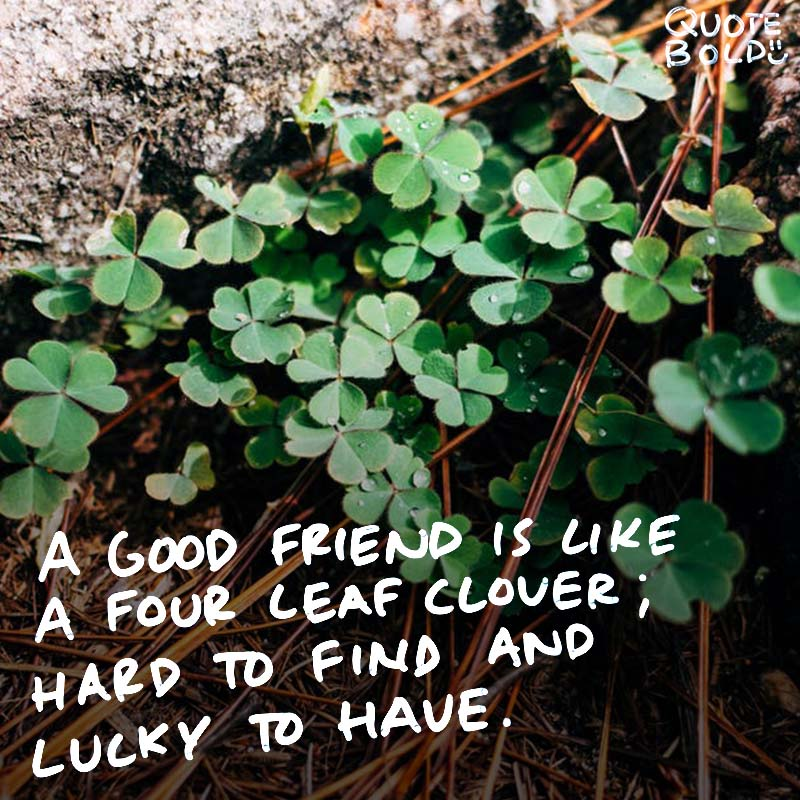 """best friend quotes image - Irish Proverb """"A good friend is like a four-leaf clover; hard to find and lucky to have."""""""