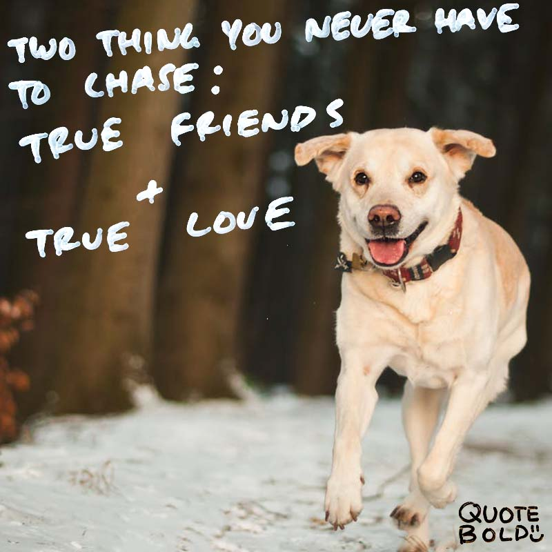 """best friend quotes image - Mandy Hale """"Two things you will never have to chase: True friends & true love."""""""