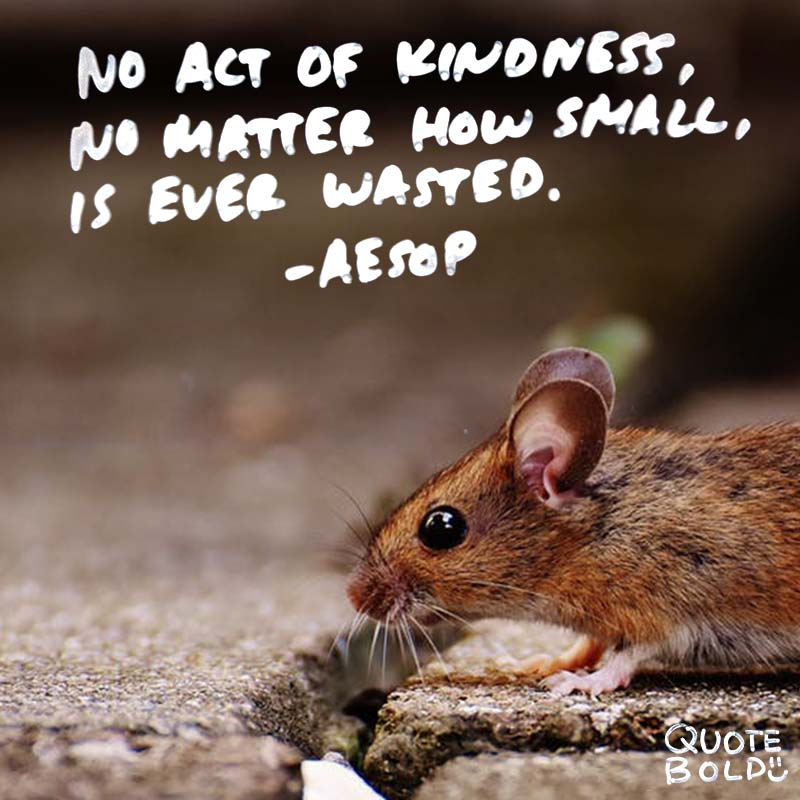 kindness quotes - aesop image
