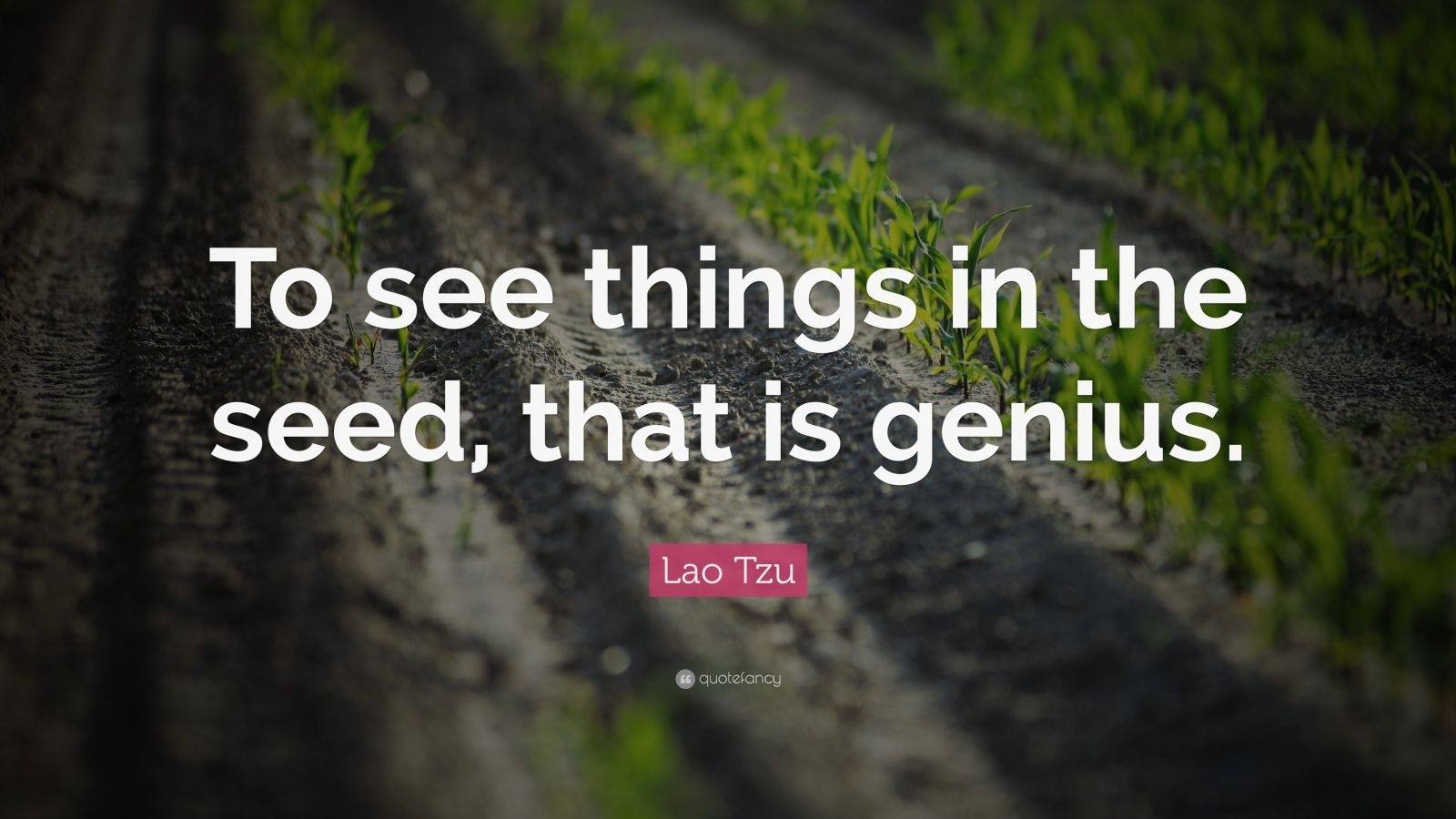 Respect Yourself Quotes Wallpaper Lao Tzu Quote To See Things In The Seed That Is Genius