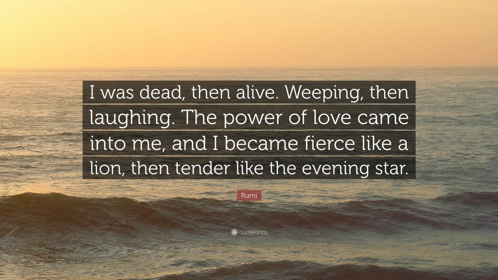 Lion Quotes Wallpaper Rumi Quote I Was Dead Then Alive Weeping Then