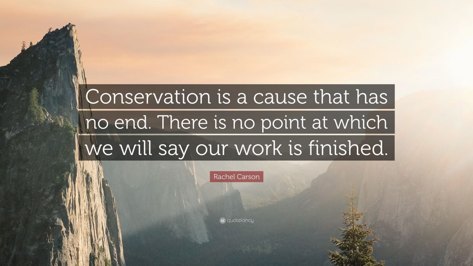 Albert Einstein Wallpaper Quotes Rachel Carson Quote Conservation Is A Cause That Has No