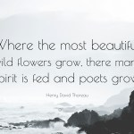 Henry David Thoreau Quote Where The Most Beautiful Wild Flowers Grow There Mans Spirit Is Fed And Poets Grow 7 Wallpapers Quotefancy