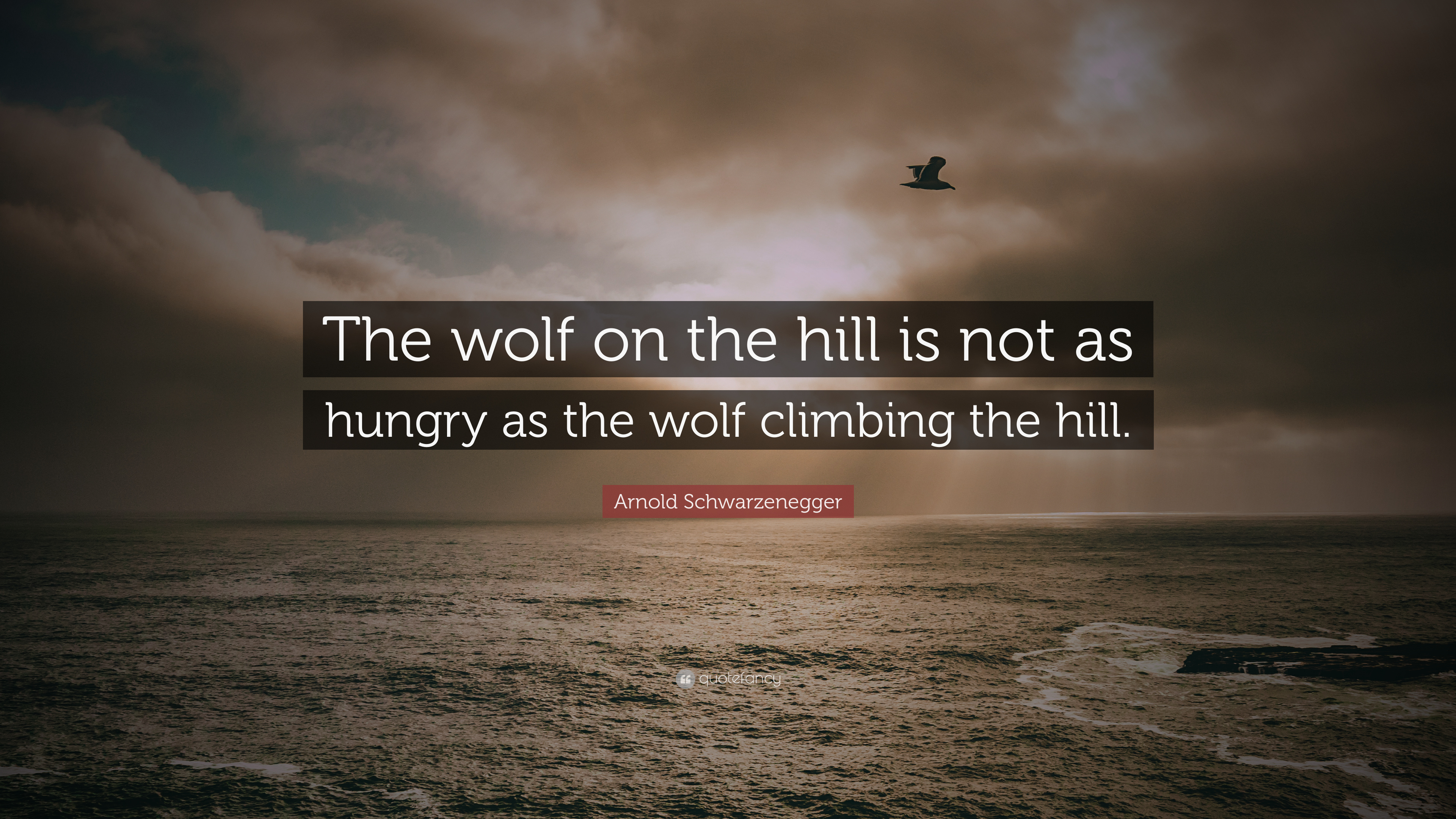 Lone Wolf Wallpaper Quote Arnold Schwarzenegger Quote The Wolf On The Hill Is Not