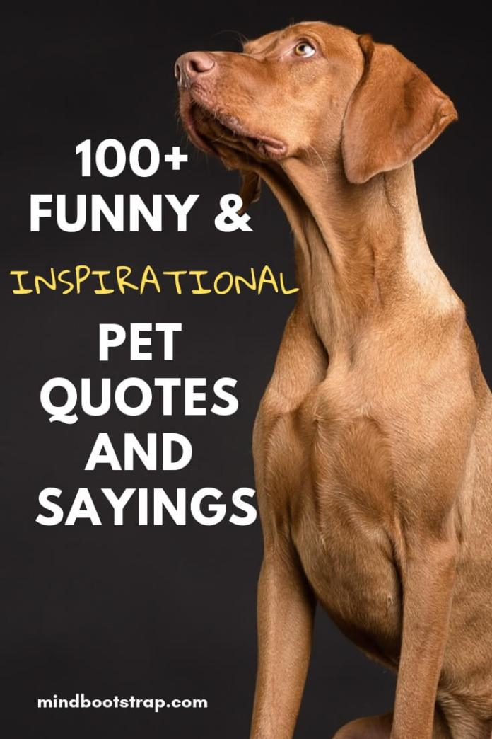 Fun & Inspirational Pet Quotes and Sayings