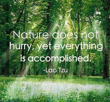 Importance Of Nature Quotes Quotesgram