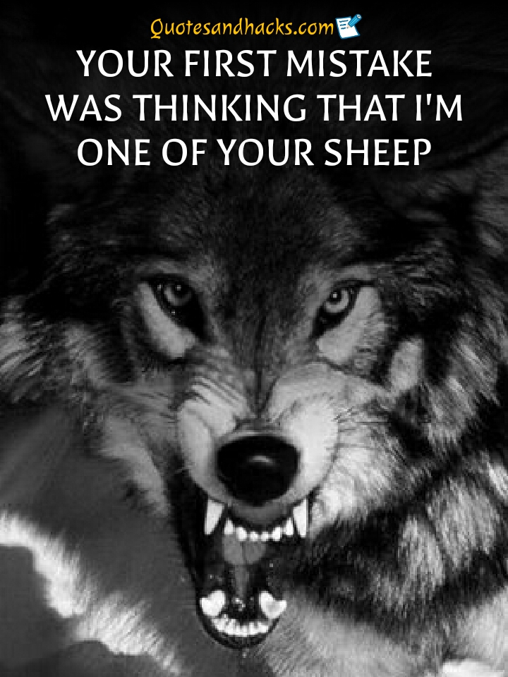 Inspirational Strength Wolf Quotes : inspirational, strength, quotes, Quotes, Trigger, Hacks