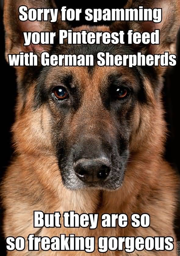 Cute Friends Wallpapers For Facebook 25 German Shepherd Quotes Sayings Amp Pictures Quotesbae