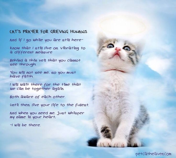 Loss Of A Pet Quote Alluring Grieving Pet Loss Quotes Meme Image 11  Quotesbae
