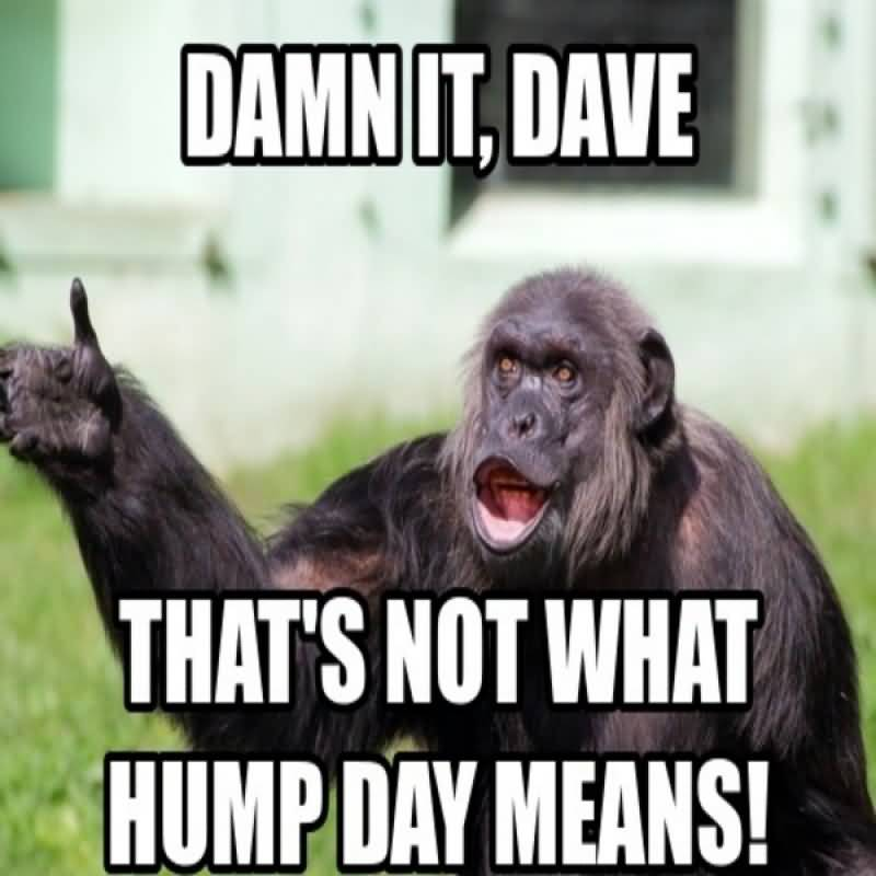 Damn It Dave That's Not What Hump Day Means!
